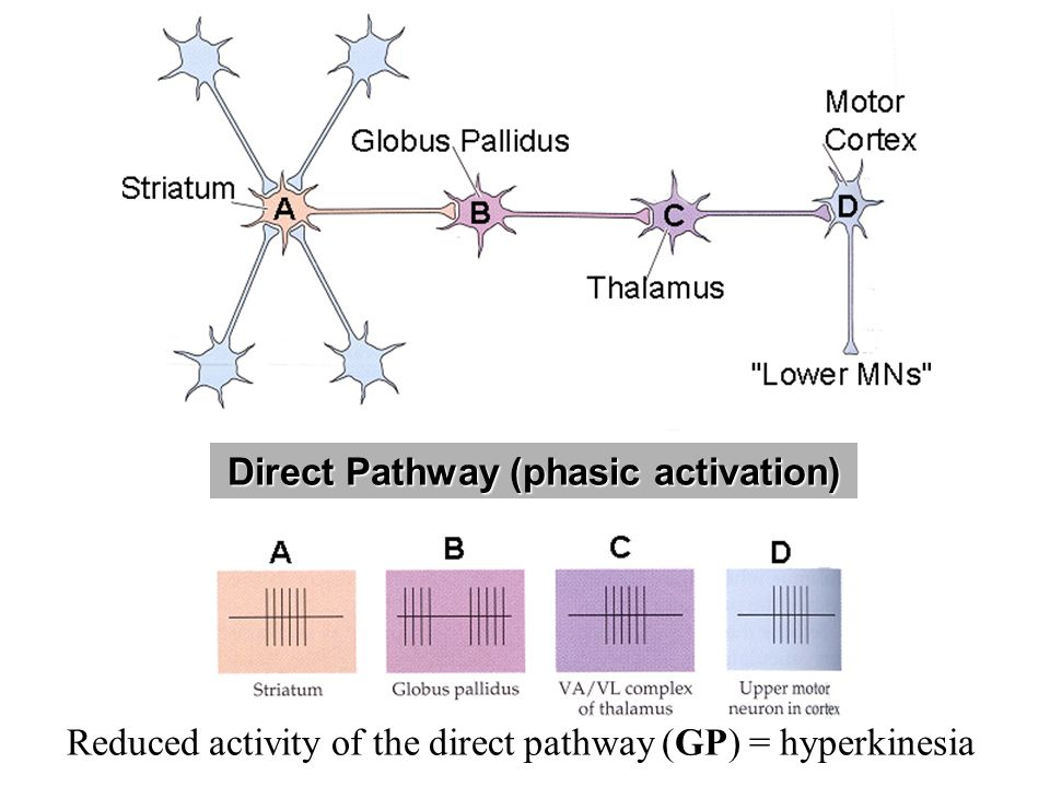 Direct Pathway (phasic activation)