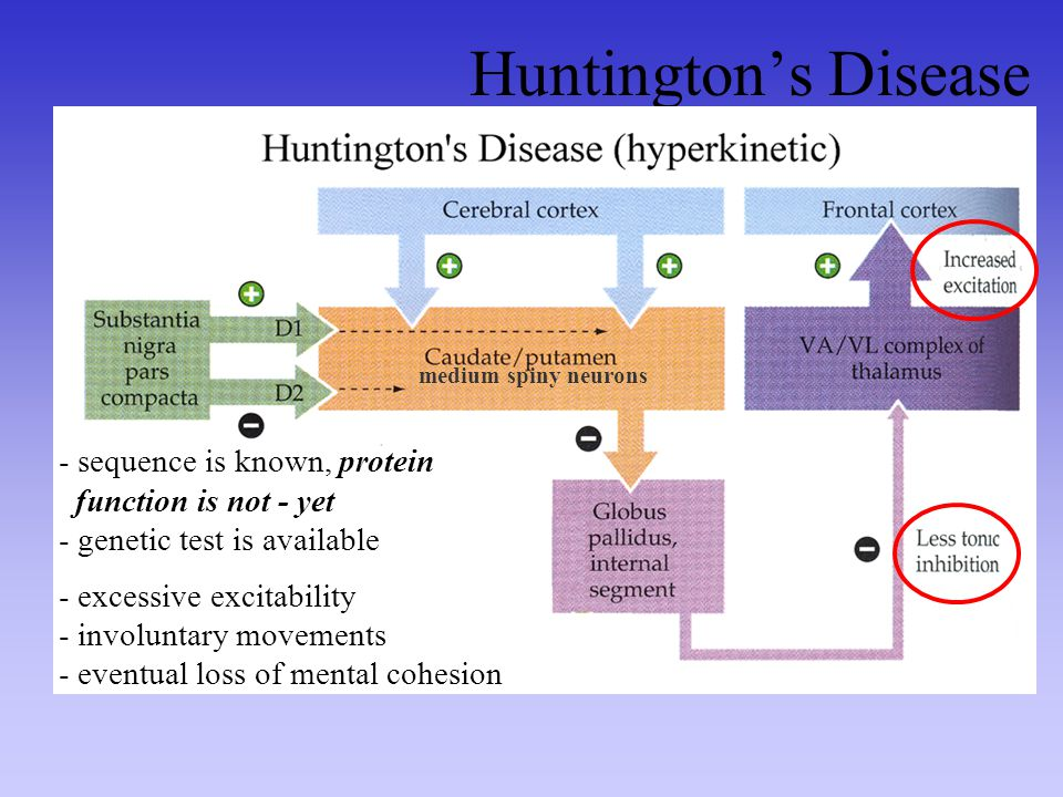 Huntington's Disease sequence is known, protein function is not - yet