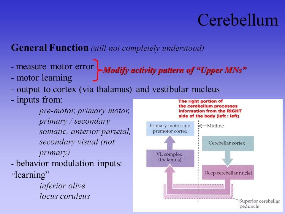 Cerebellum General Function (still not completely understood)