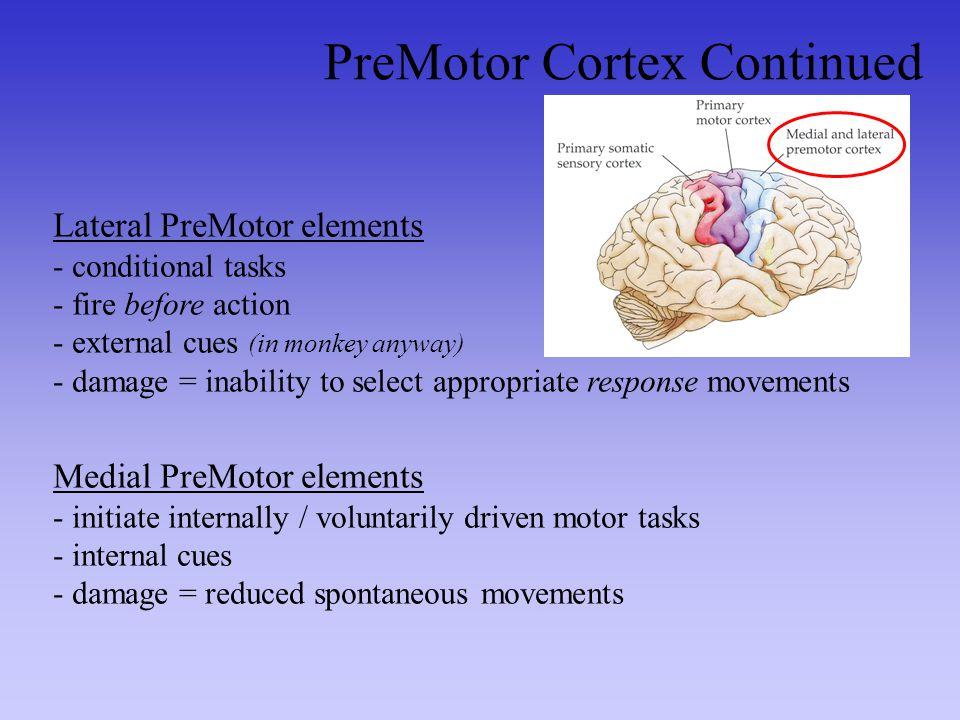 PreMotor Cortex Continued