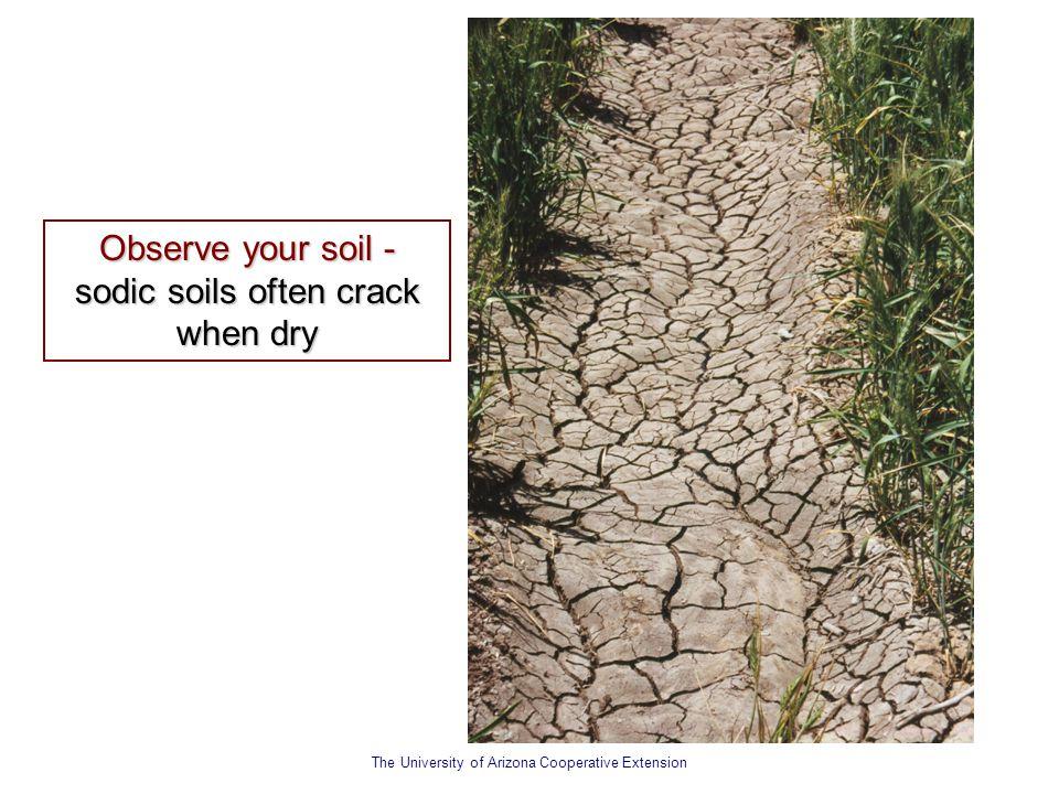 Observe your soil - sodic soils often crack when dry