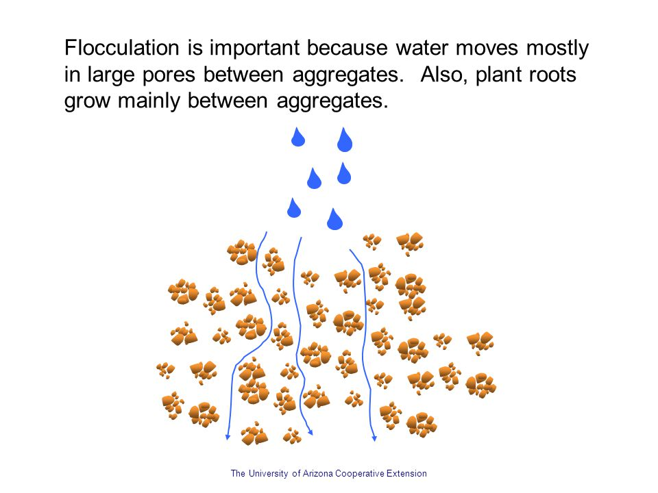 Flocculation is important because water moves mostly in large pores between aggregates. Also, plant roots grow mainly between aggregates.