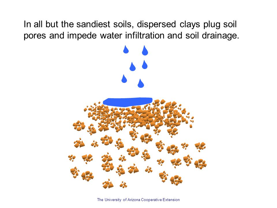 In all but the sandiest soils, dispersed clays plug soil pores and impede water infiltration and soil drainage.
