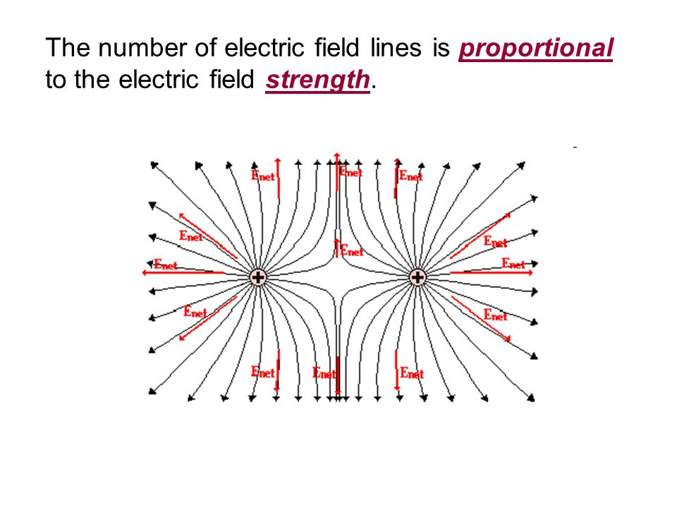 The number of electric field lines is proportional