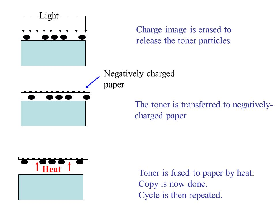 Light Charge image is erased to. release the toner particles. - - - - - - - Negatively charged.