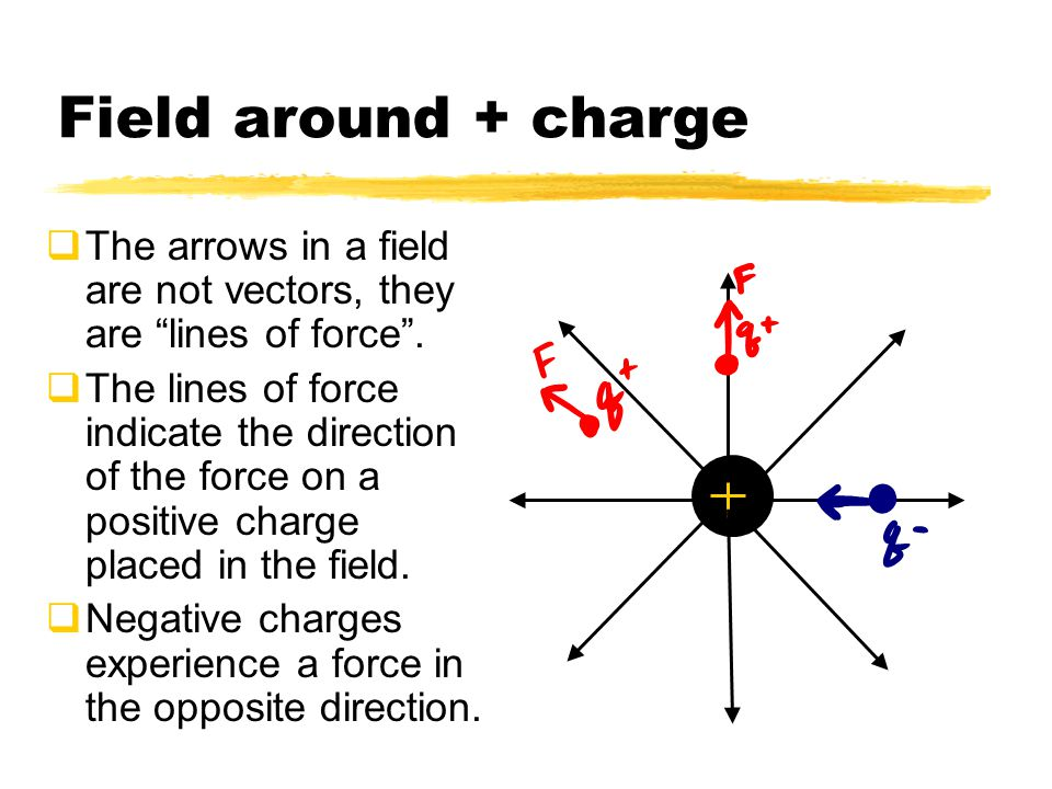Field around + charge The arrows in a field are not vectors, they are lines of force .