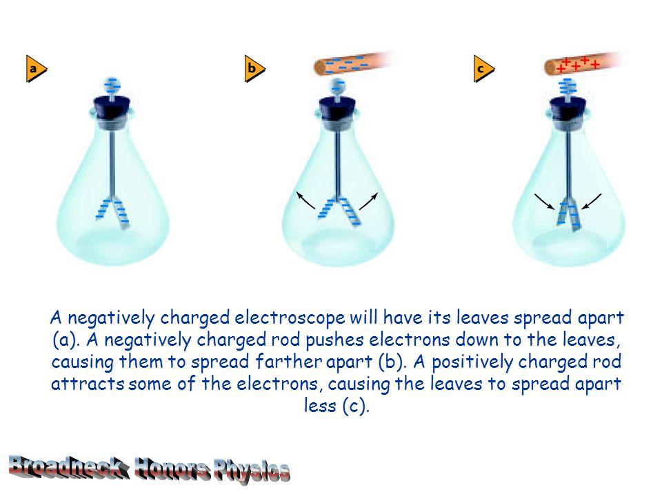A negatively charged electroscope will have its leaves spread apart (a).