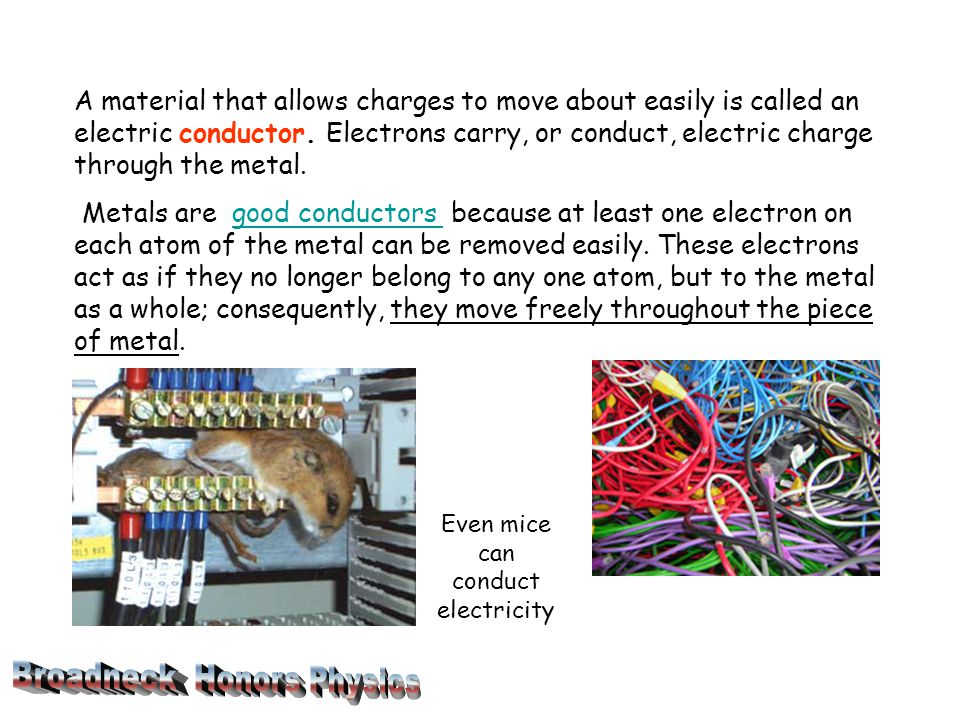 Even mice can conduct electricity