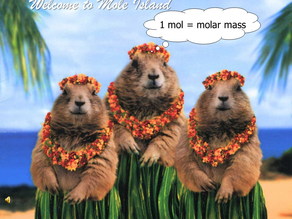 Welcome to Mole Island 1 mol = molar mass