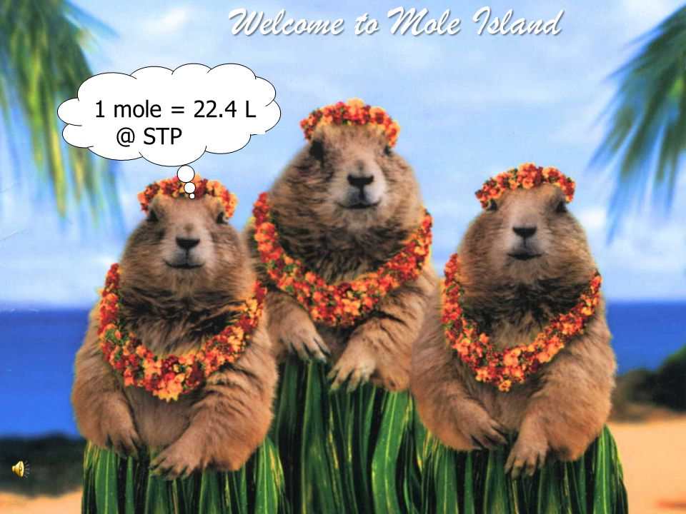 Welcome to Mole Island 1 mole = 22.4 L @ STP