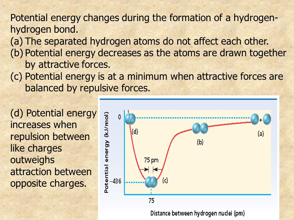 Potential energy changes during the formation of a hydrogen-hydrogen bond.