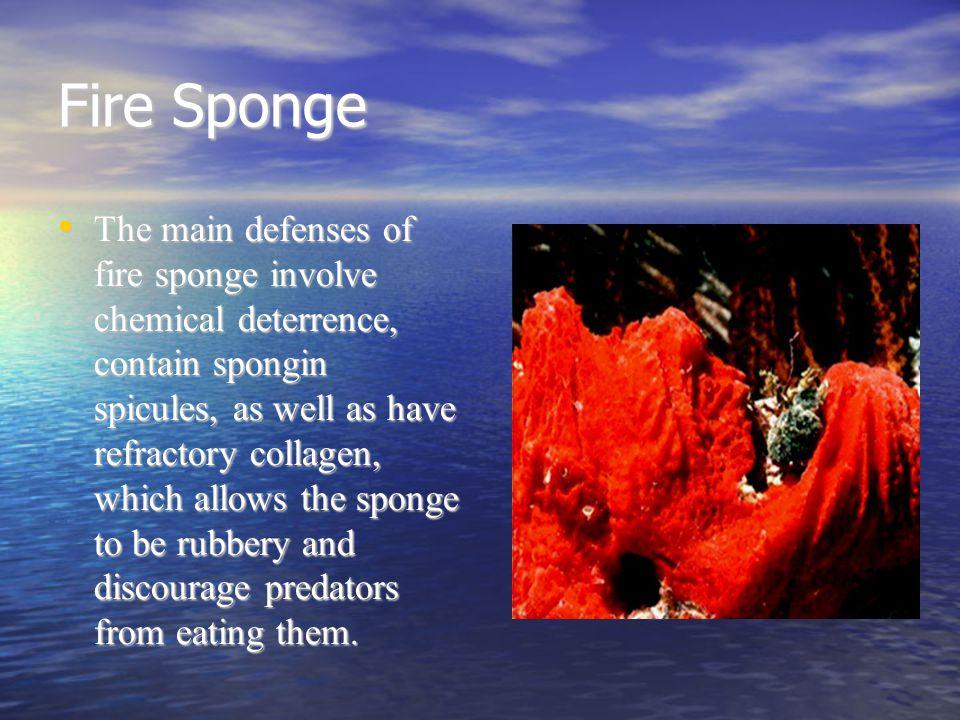 Fire Sponge