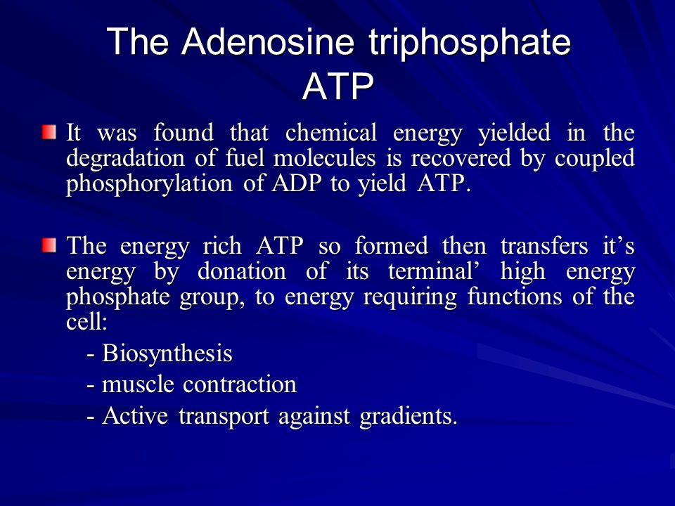 The Adenosine triphosphate ATP