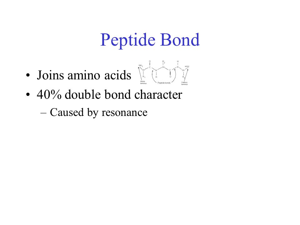 Peptide Bond Joins amino acids 40% double bond character