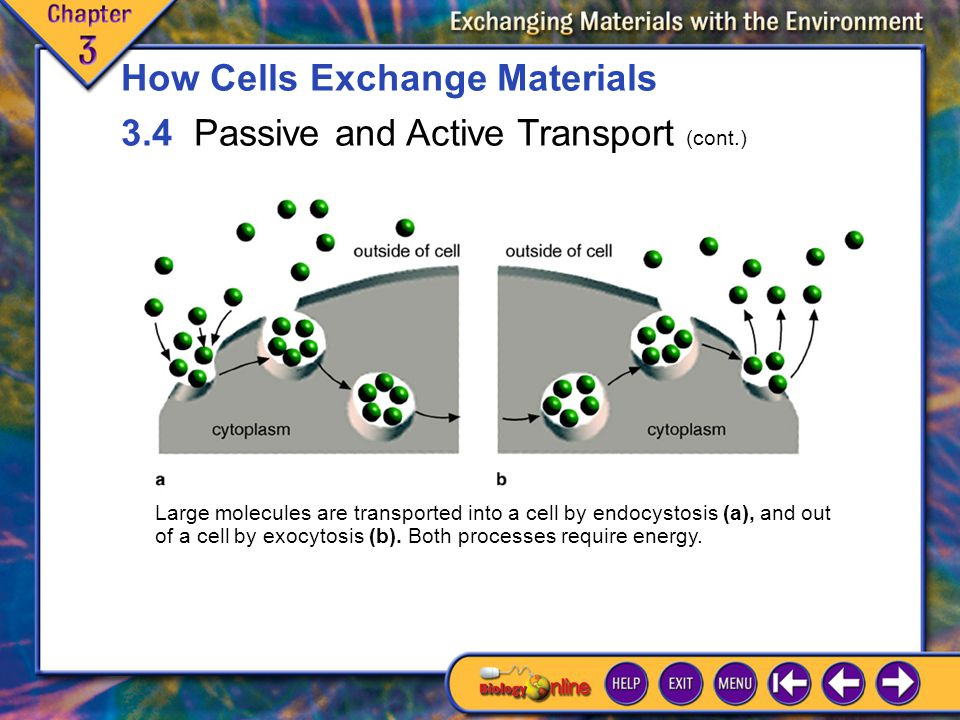 3.4 Passive and Active Transport 7