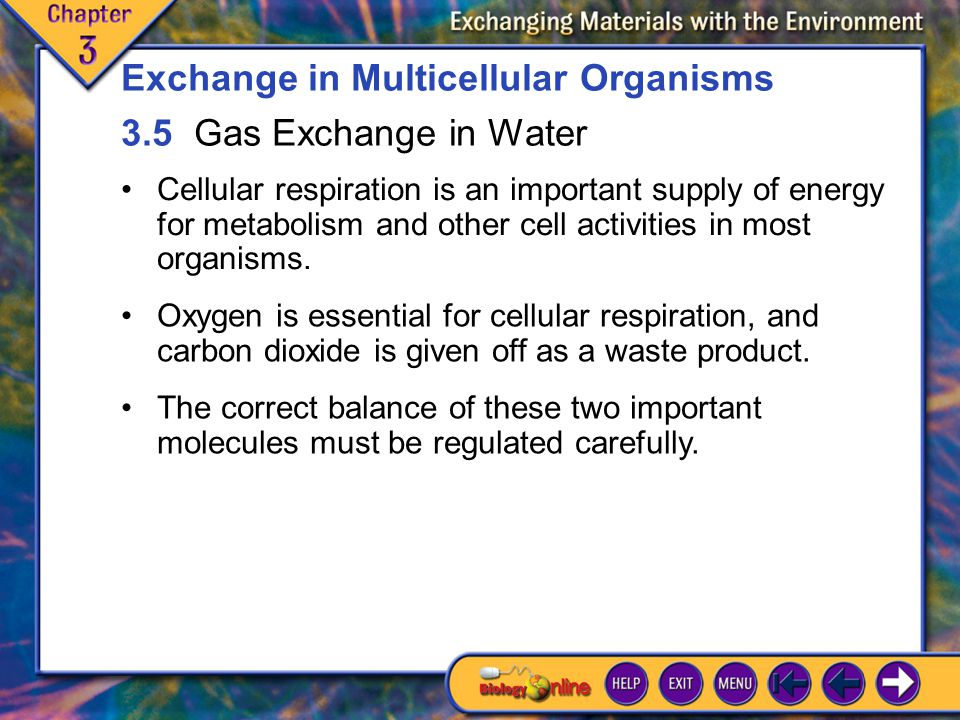 Exchange in Multicellular Organisms 3.5 Gas Exchange in Water