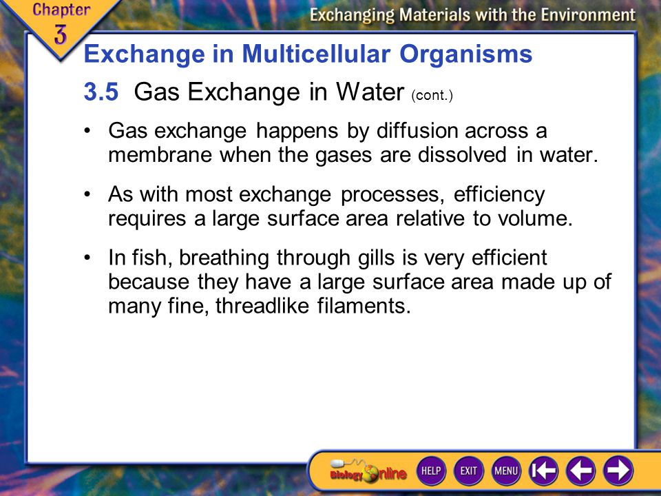 Exchange in Multicellular Organisms 3.5 Gas Exchange in Water (cont.)