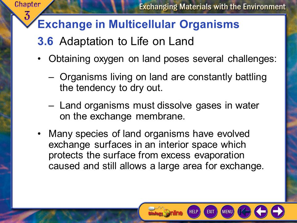 3.6 Adaptation to Life on Land 1