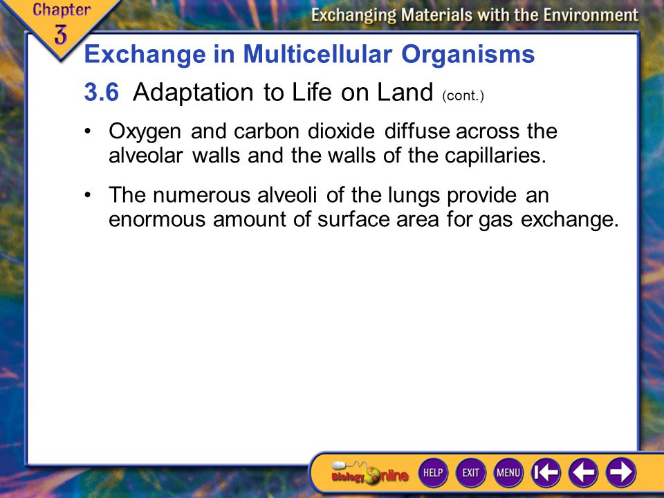 3.6 Adaptation to Life on Land 6