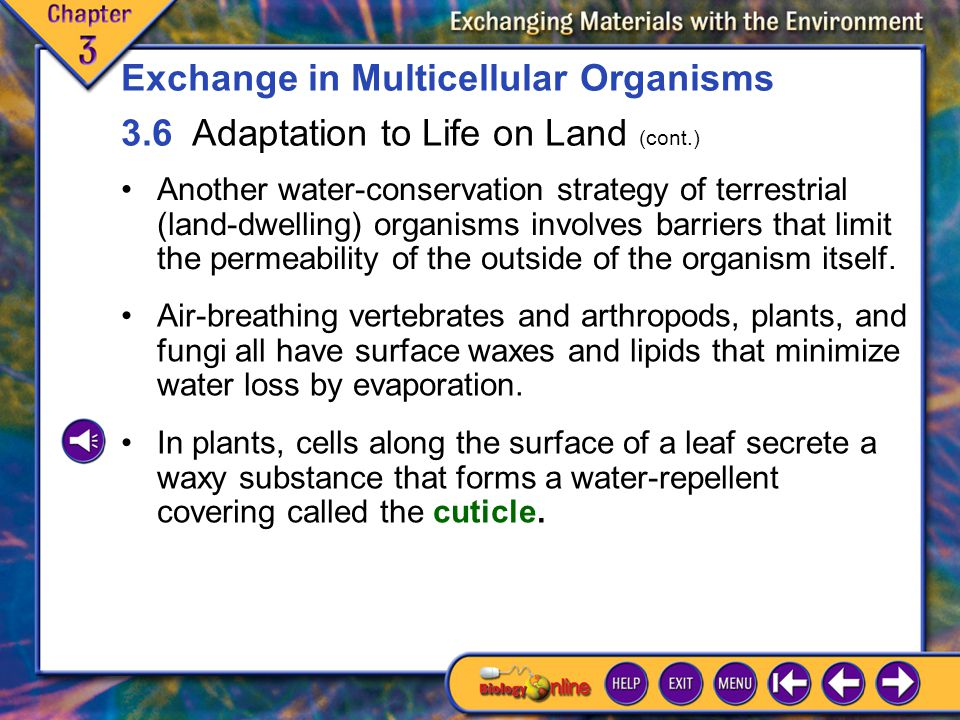 3.6 Adaptation to Life on Land 8