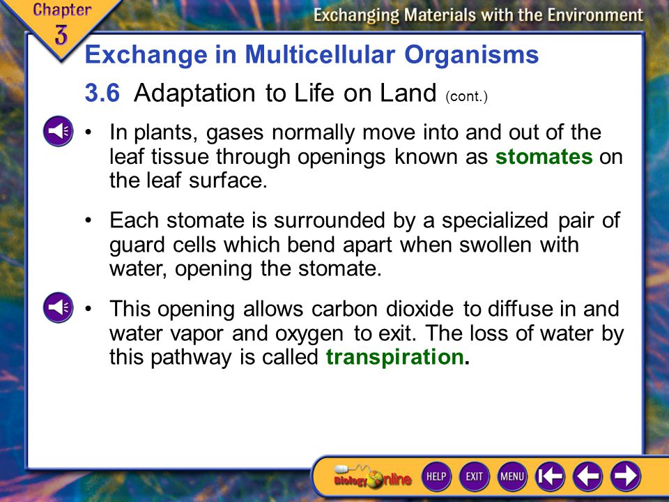 3.6 Adaptation to Life on Land 9