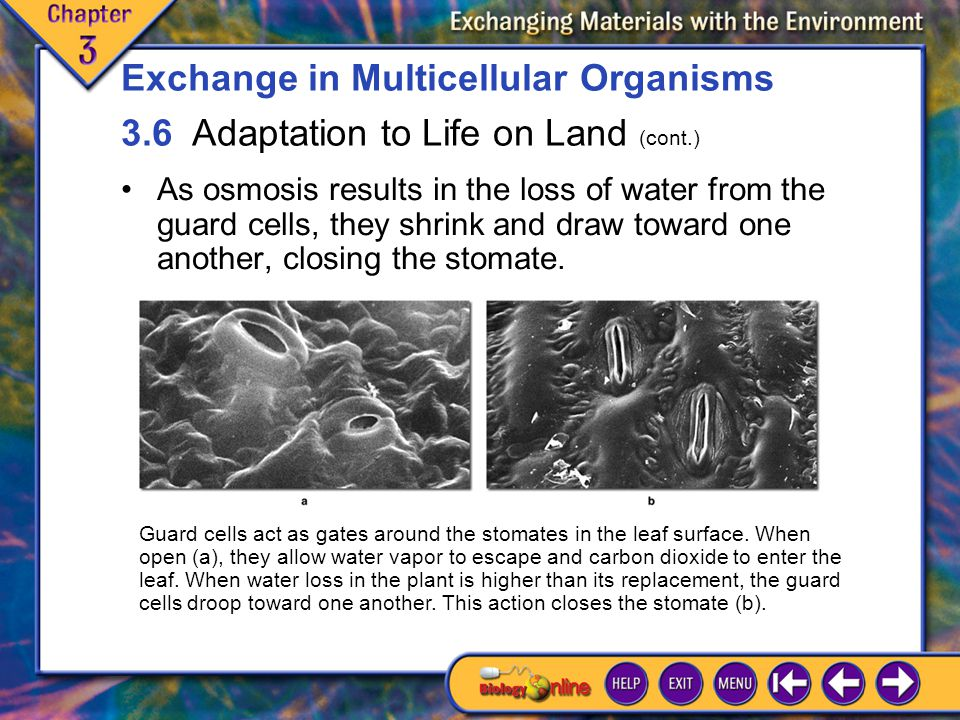 3.6 Adaptation to Life on Land 10