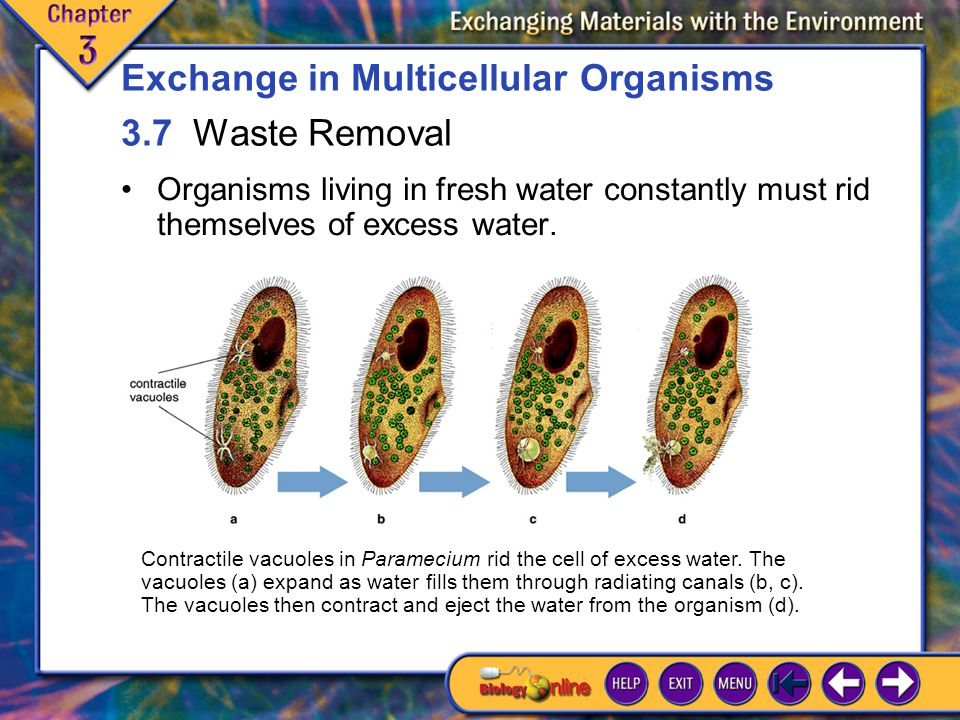 Exchange in Multicellular Organisms 3.7 Waste Removal
