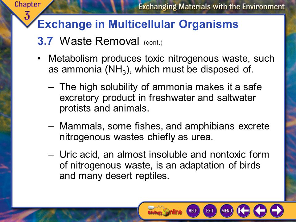 Exchange in Multicellular Organisms 3.7 Waste Removal (cont.)