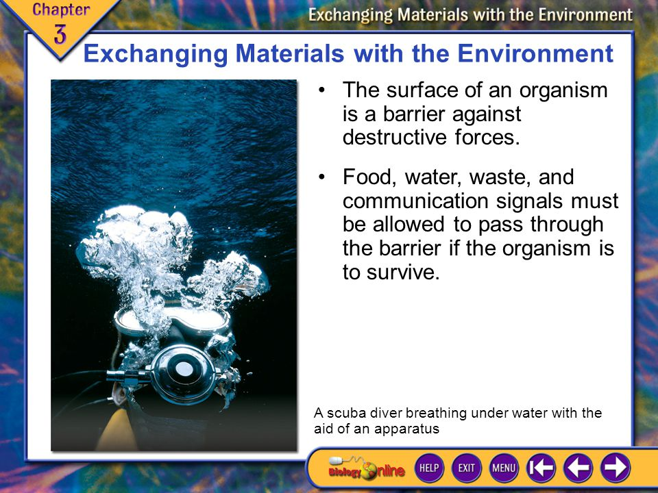 Exchanging Materials with the Environment