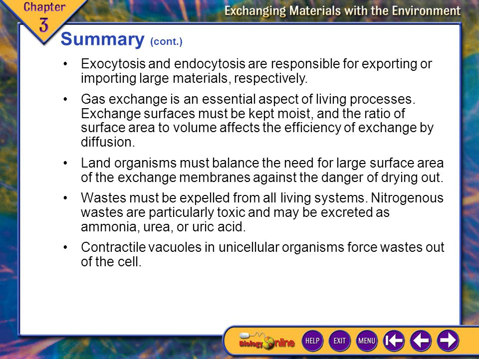 Summary (cont.) Exocytosis and endocytosis are responsible for exporting or importing large materials, respectively.