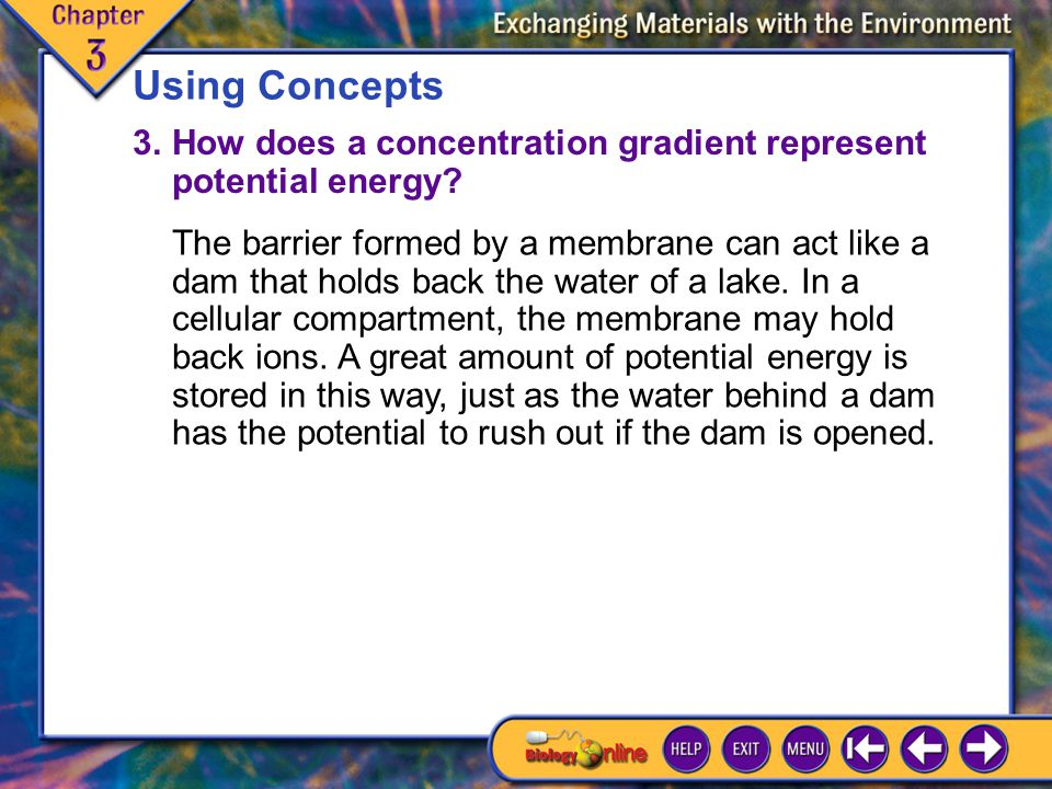 Using Concepts 3. How does a concentration gradient represent potential energy