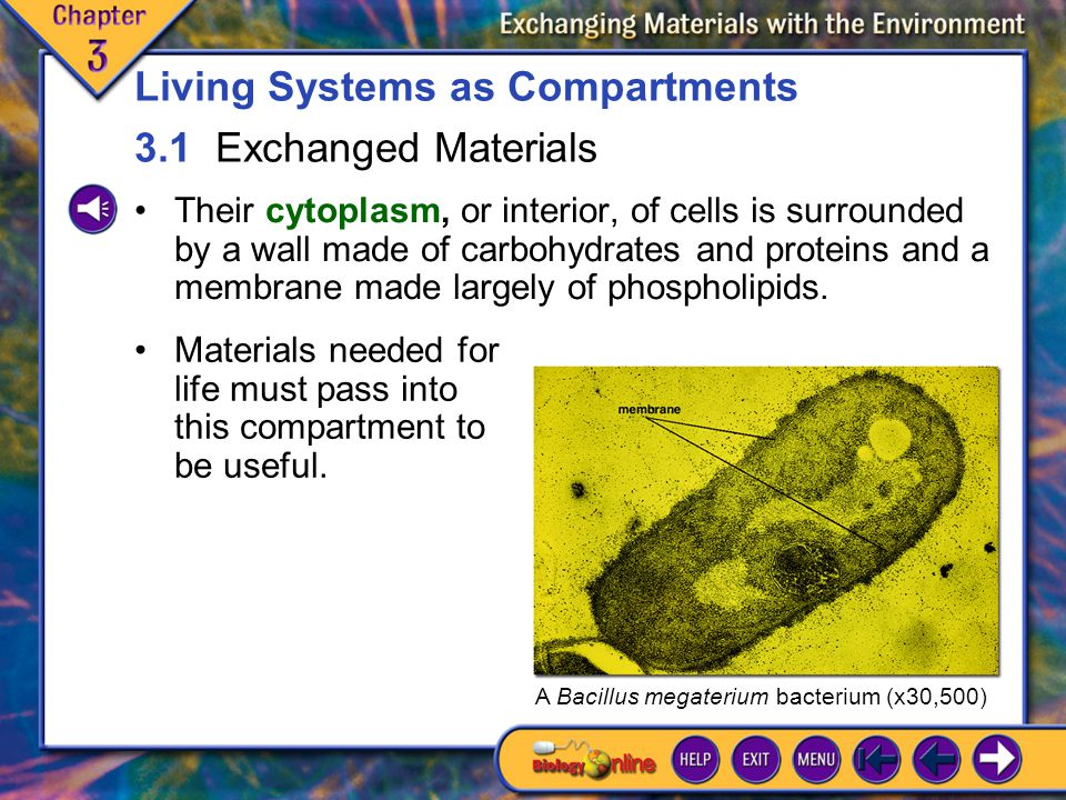 Living Systems as Compartments 3.1 Exchanged Materials