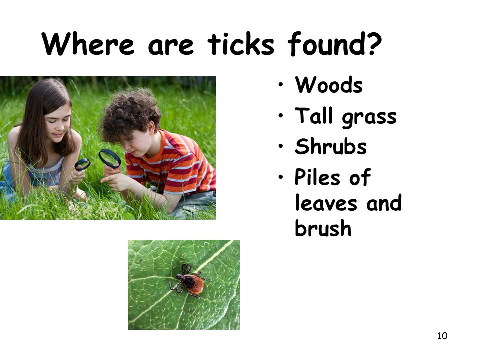 Where are ticks found Woods Tall grass Shrubs