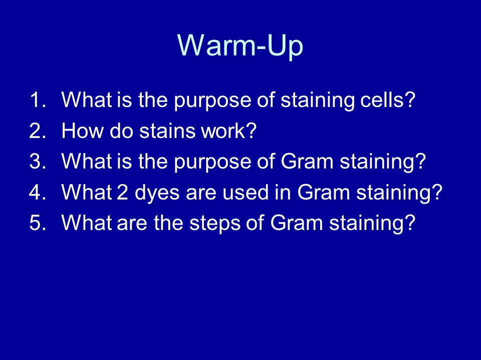 Warm-Up What is the purpose of staining cells How do stains work
