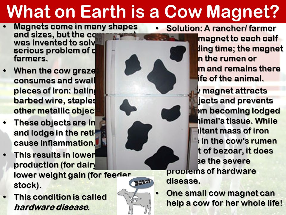 What on Earth is a Cow Magnet
