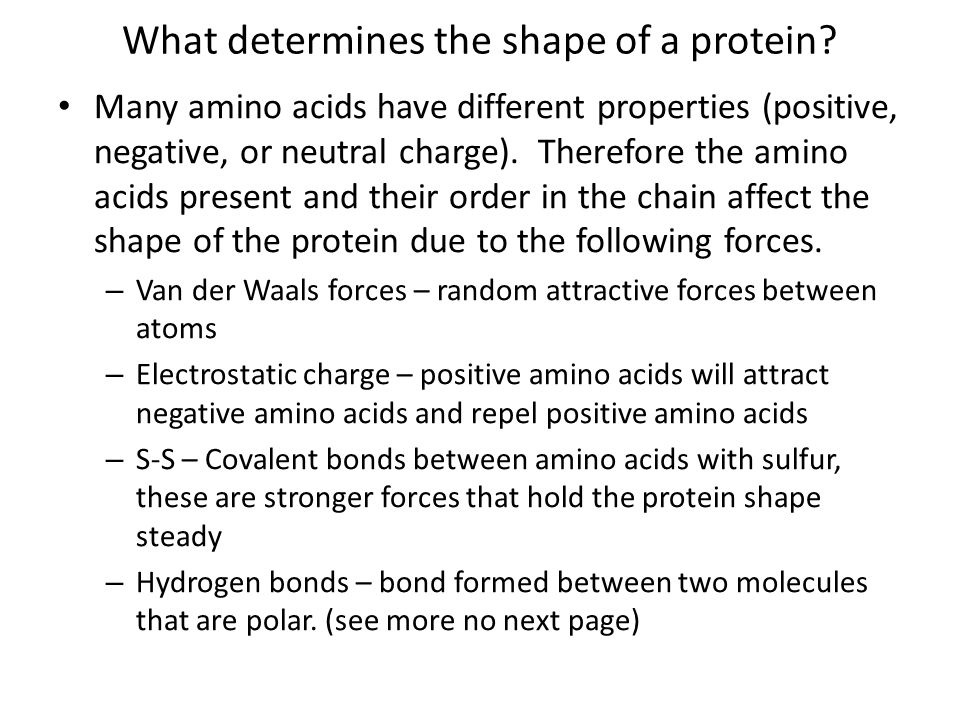 What determines the shape of a protein