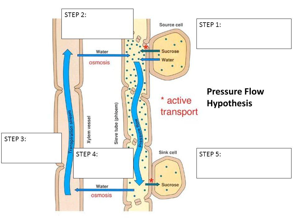 Pressure Flow Hypothesis