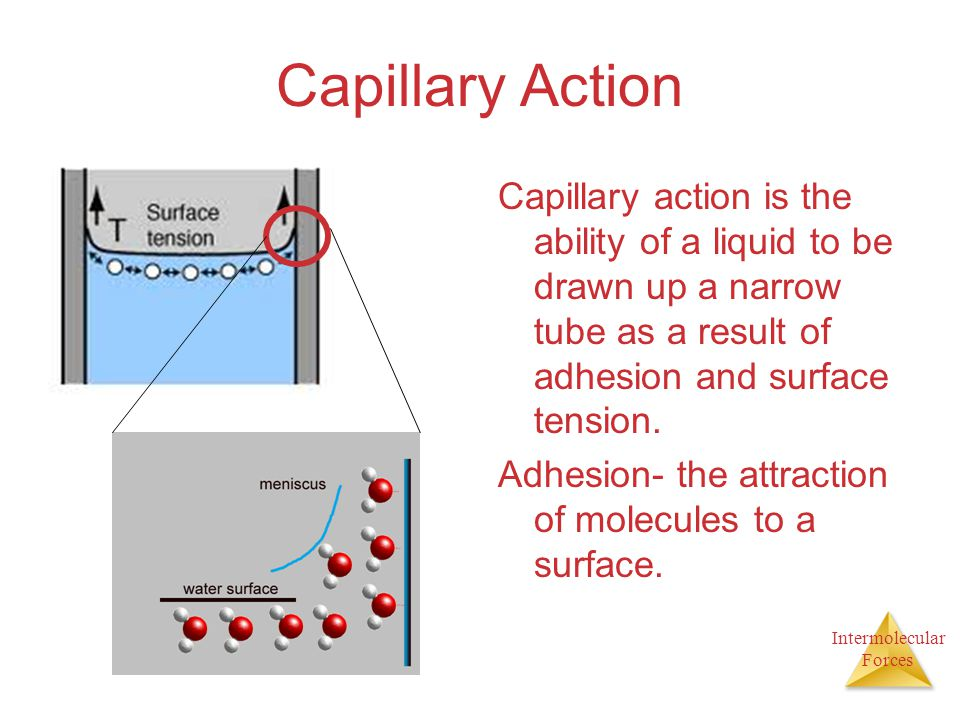 Capillary Action Capillary action is the ability of a liquid to be drawn up a narrow tube as a result of adhesion and surface tension.