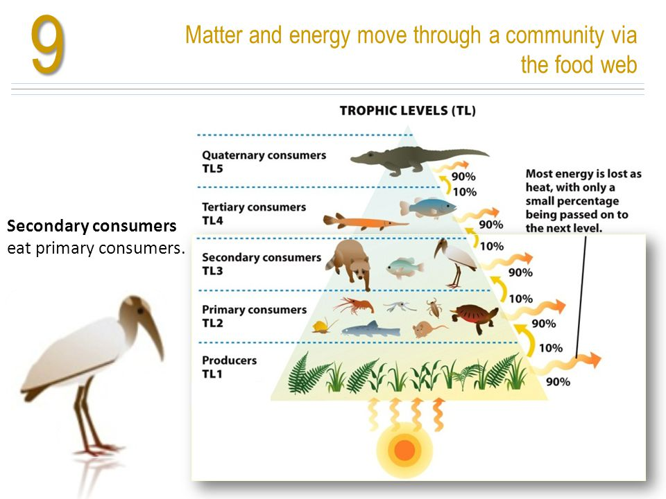9 Matter and energy move through a community via the food web