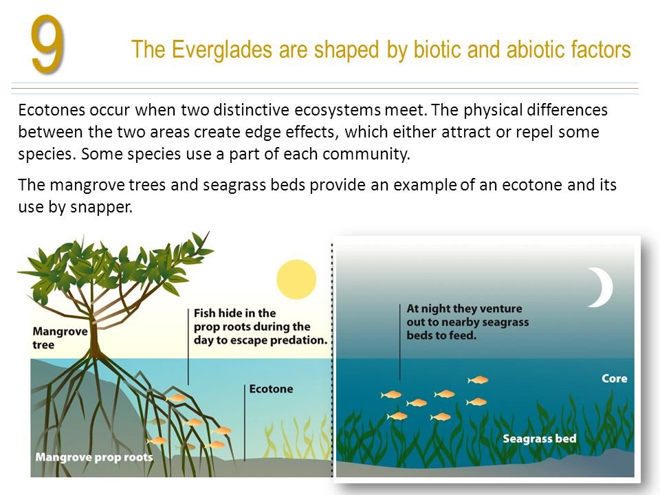 9 The Everglades are shaped by biotic and abiotic factors