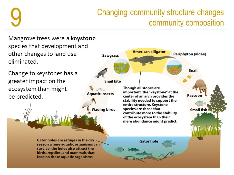 9 Changing community structure changes community composition