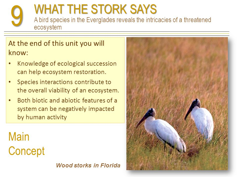 9 WHAT THE STORK SAYS A bird species in the Everglades reveals the intricacies of a threatened ecosystem.