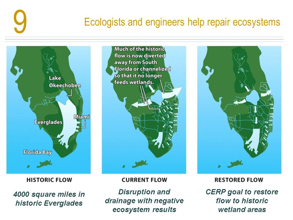 9 Ecologists and engineers help repair ecosystems