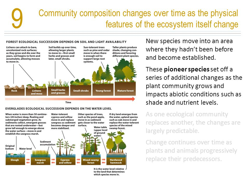 9 Community composition changes over time as the physical features of the ecosystem itself change.