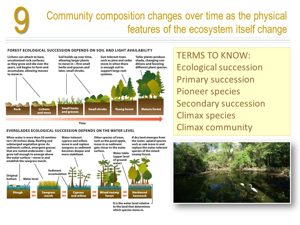 9 Community composition changes over time as the physical features of the ecosystem itself change. TERMS TO KNOW: