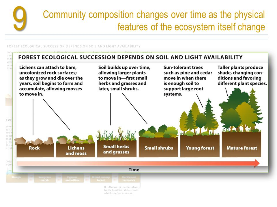 9 Community composition changes over time as the physical features of the ecosystem itself change