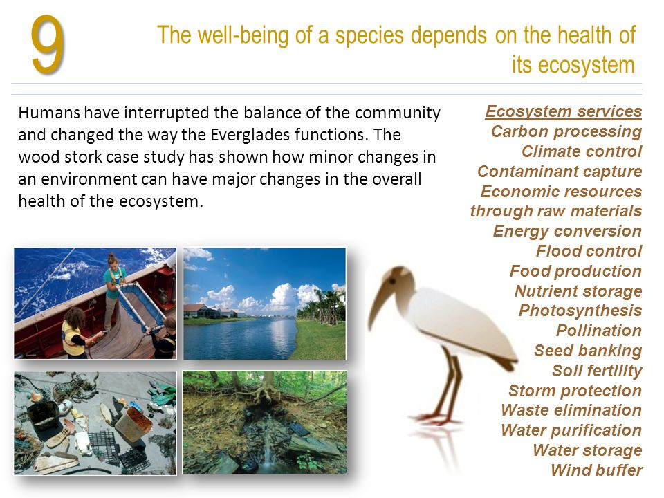 9 The well-being of a species depends on the health of its ecosystem