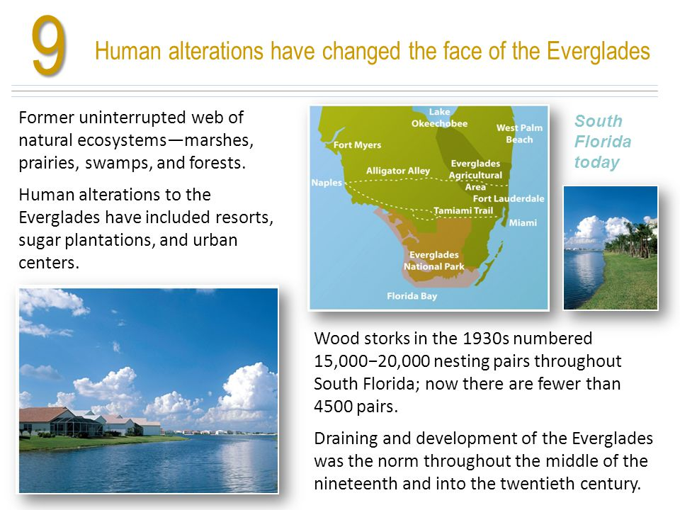 9 Human alterations have changed the face of the Everglades