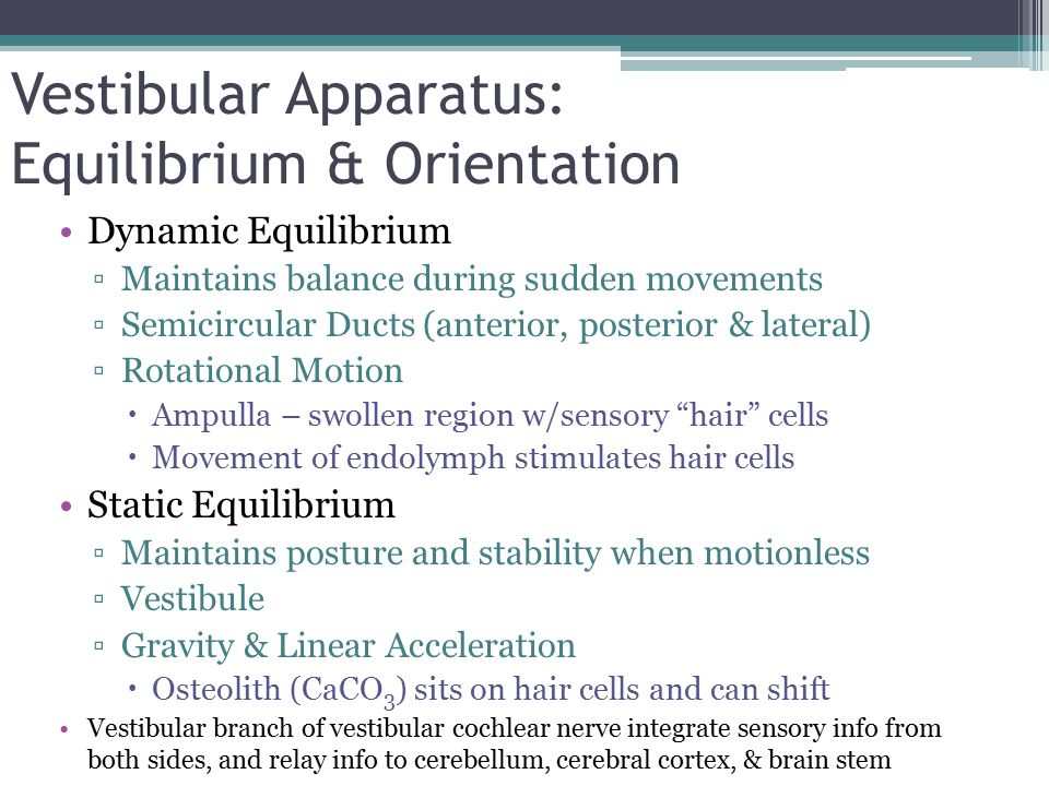 importance of hair cells with the sense of hearing and equilibrium Your sense of physical balance, or equilibrium position disturb fluid in the labyrinth and stimulate tiny vestibular hair cells if your balance tests.