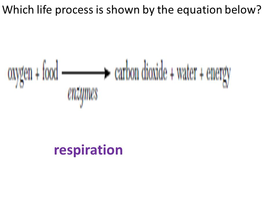 Which life process is shown by the equation below